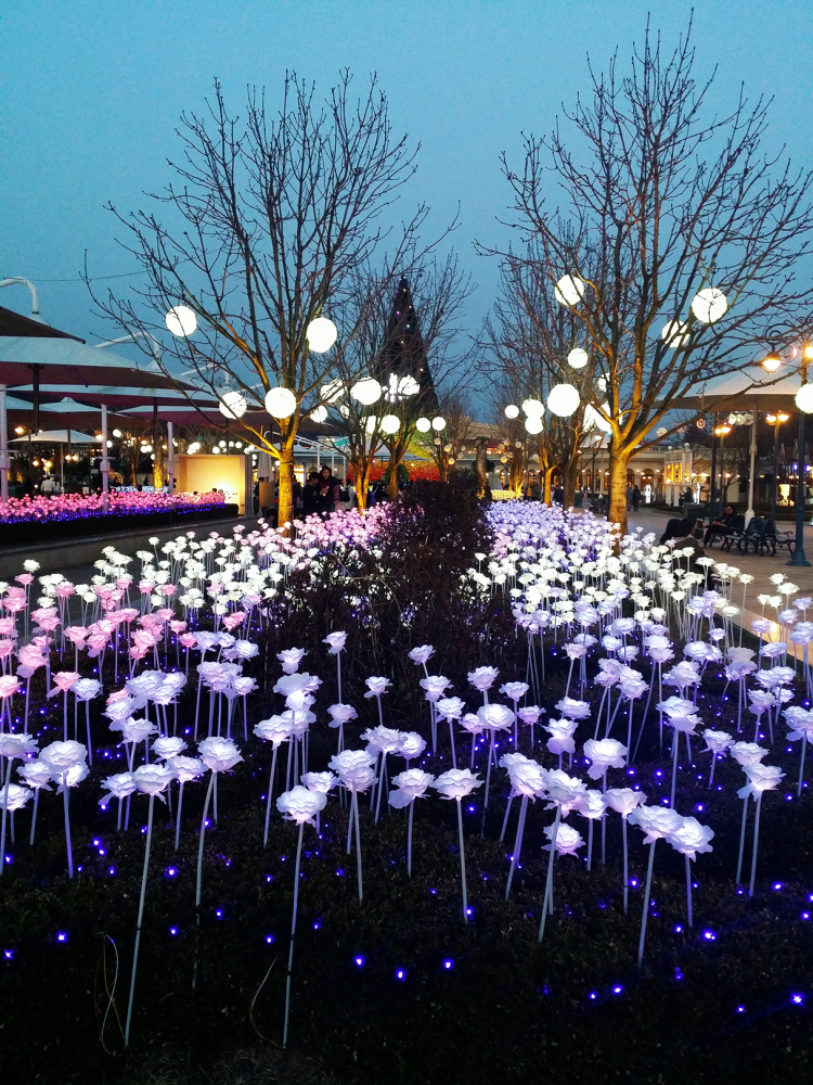 Rows of LED roses glowing purple, pink and white in the evening.
