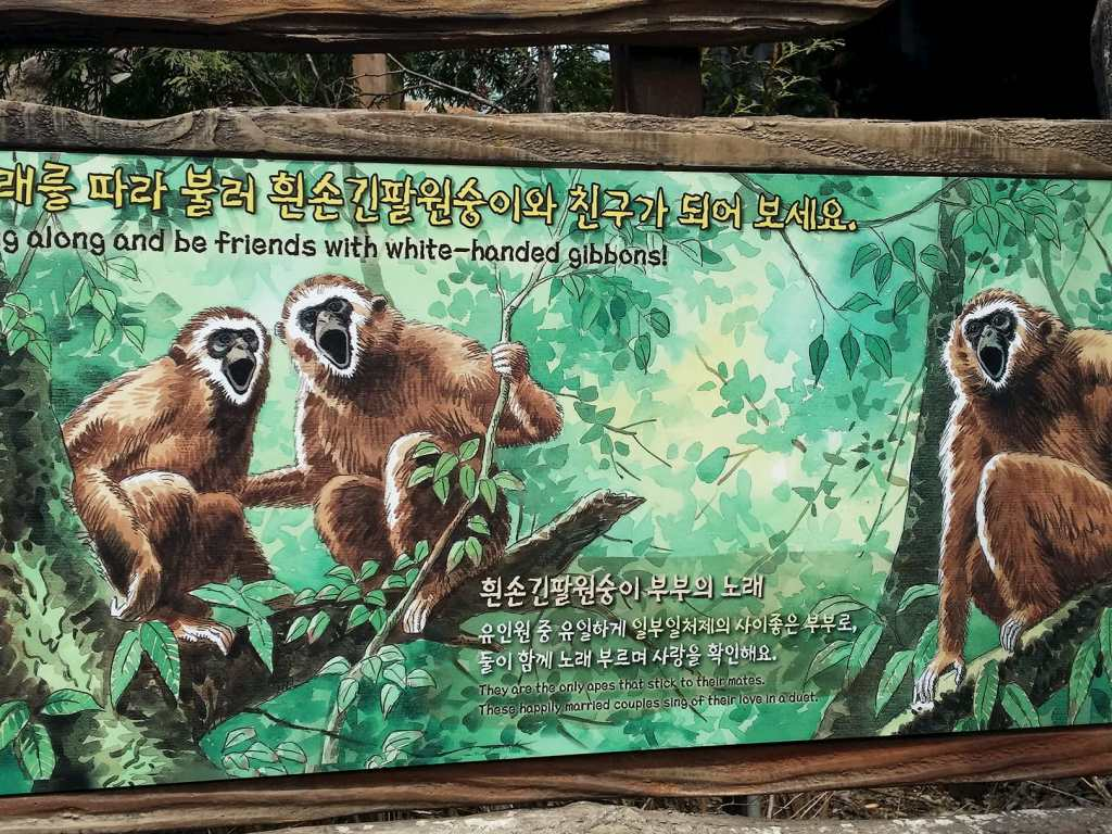Poster of white-handed gibbons.