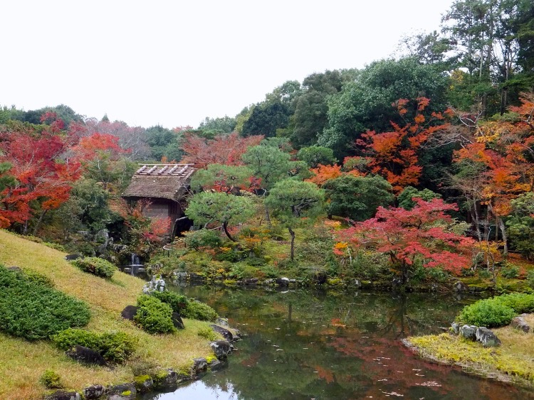 Thatched hut at the edge of a pond peeking from an early autumn foliage of green, red and orange.