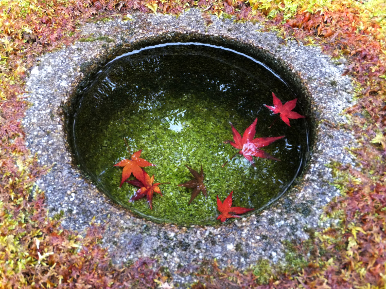 A tiny moss-covered stone pot filled with crystal clear water. Several maple leaves float on the water in the pot.