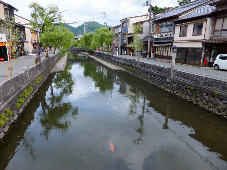 A lone carp swimming in the clear river in Kinosaki Onsen Town.