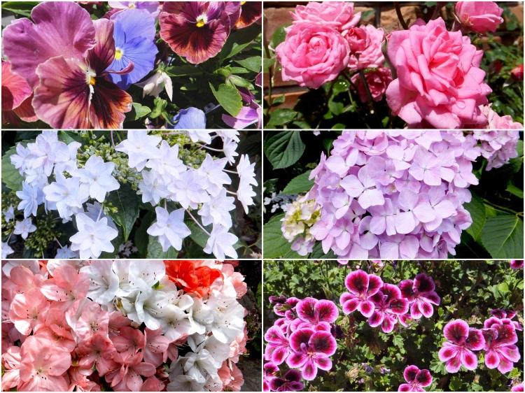 Kinosaki_flowers