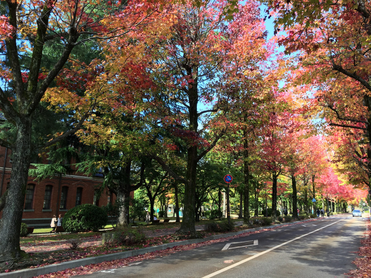 A mosaic of red, yellow and green leaves adorn tall trees delineating a road.