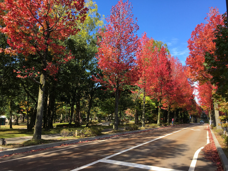A road flanked by brilliant red autumn trees.