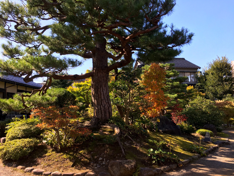A large pine tree with many smaller trees and bushes surrounding it in shades of orange, yellow and green.